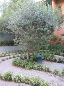 Labyrinth and Olive Tree - Peter Brook Memorial